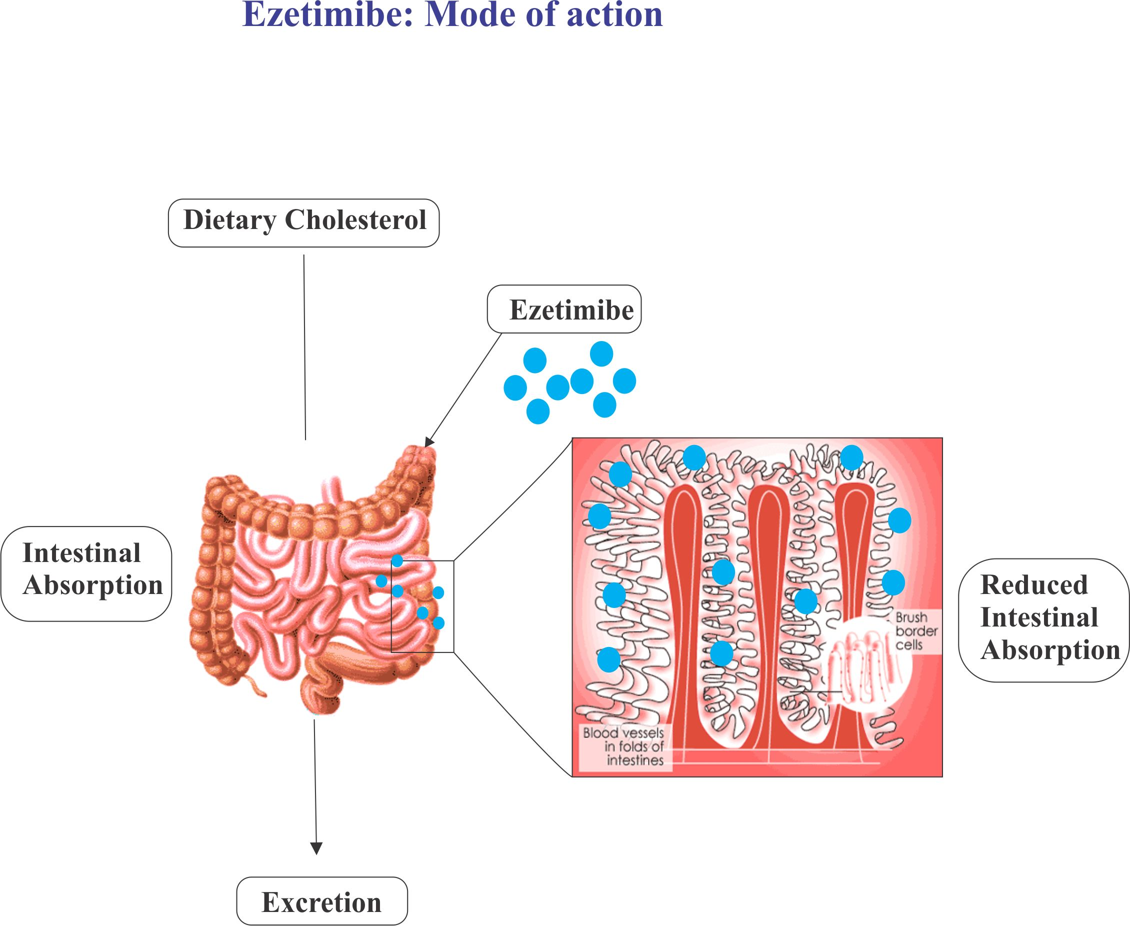 Ezetimibe : Mode of action