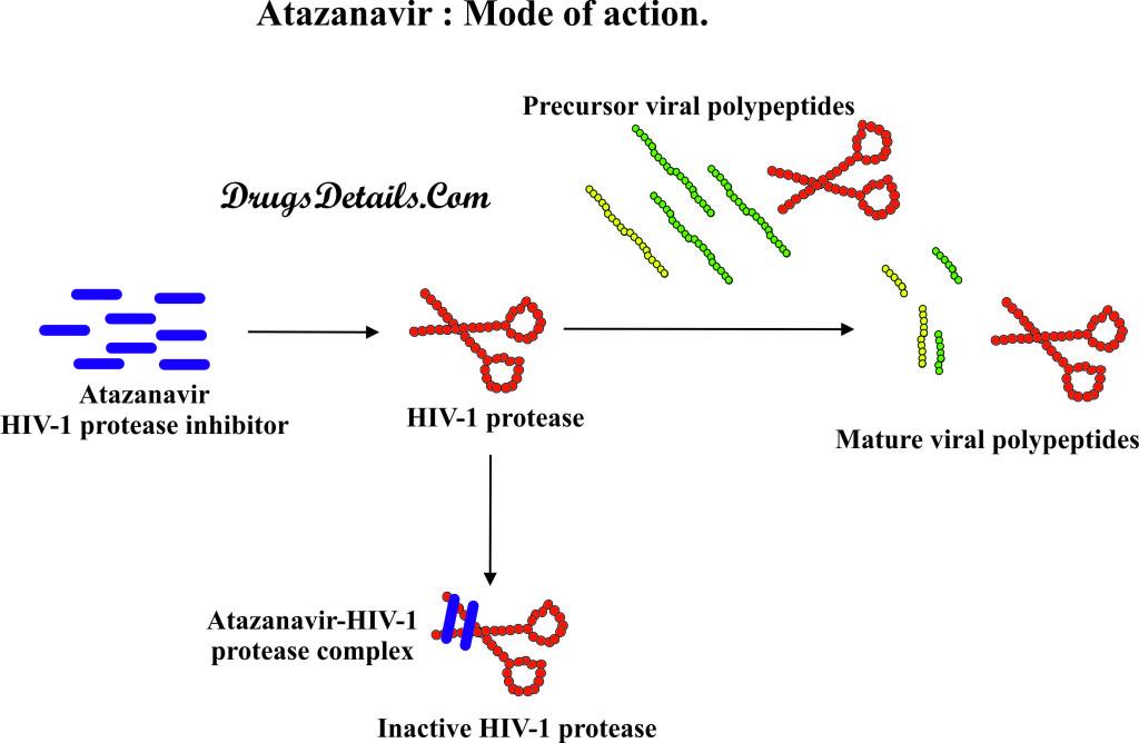 Atazanavir : Mode of Action