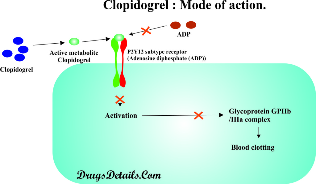 Clopidogrel : Mode of action.