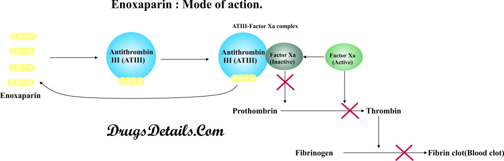 Enoxaparin : Mode of Action.