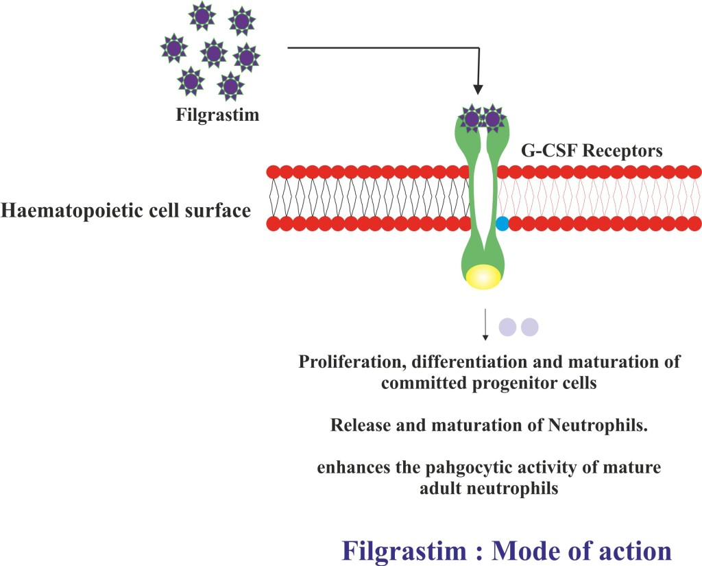 Filgrastim: Mode of action.