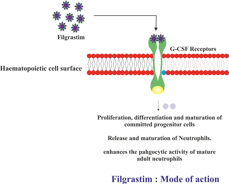 Filgrastim – Drug Details
