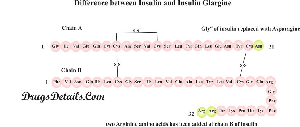 Difference between Insulin and Insulin Glargine