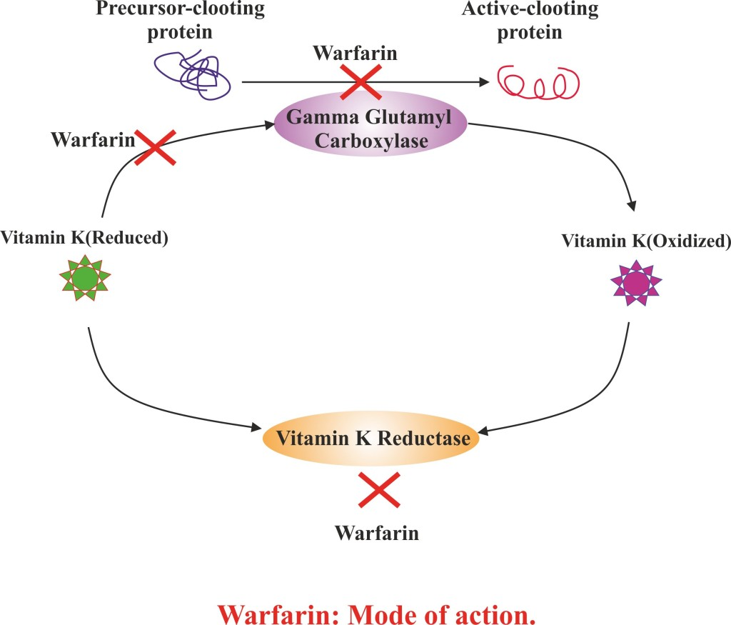 Warfarin : Mode of action.