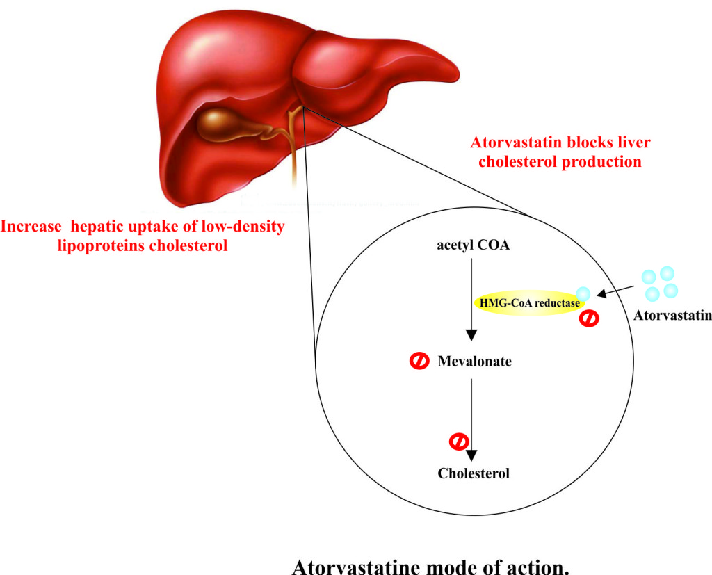 Atorvastatine mode of action.