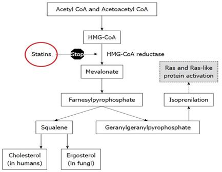 Pravastatin mechanism