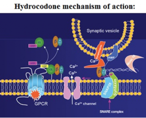 hydrocodone mechanism of action