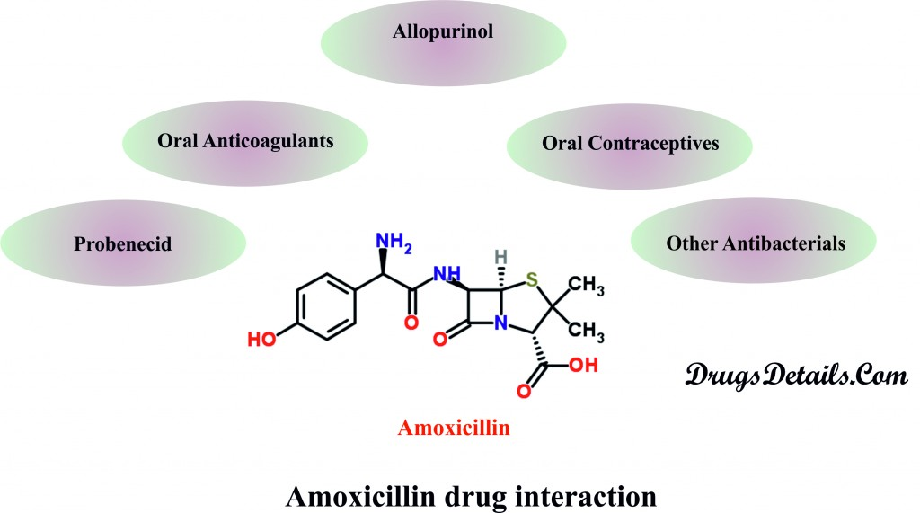 Amoxicillin Drug Interactions