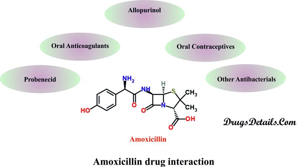Amoxicillin Drug Interactions