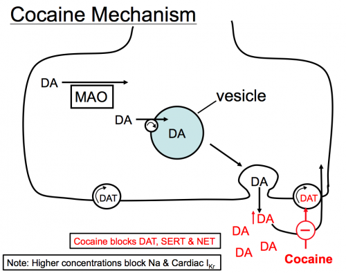 Mode of action cocaine