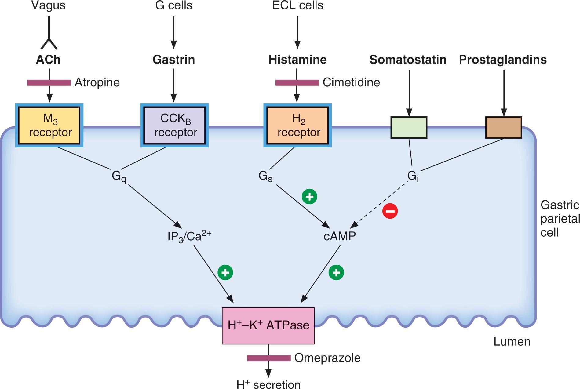 Famotidine Drug Details