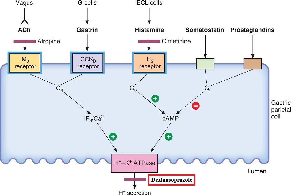 dexlansoprazole mechanism of action