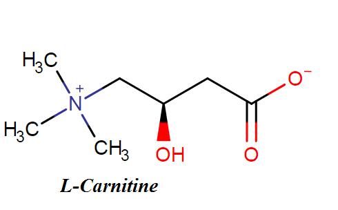 L-Carnitine molecule structure