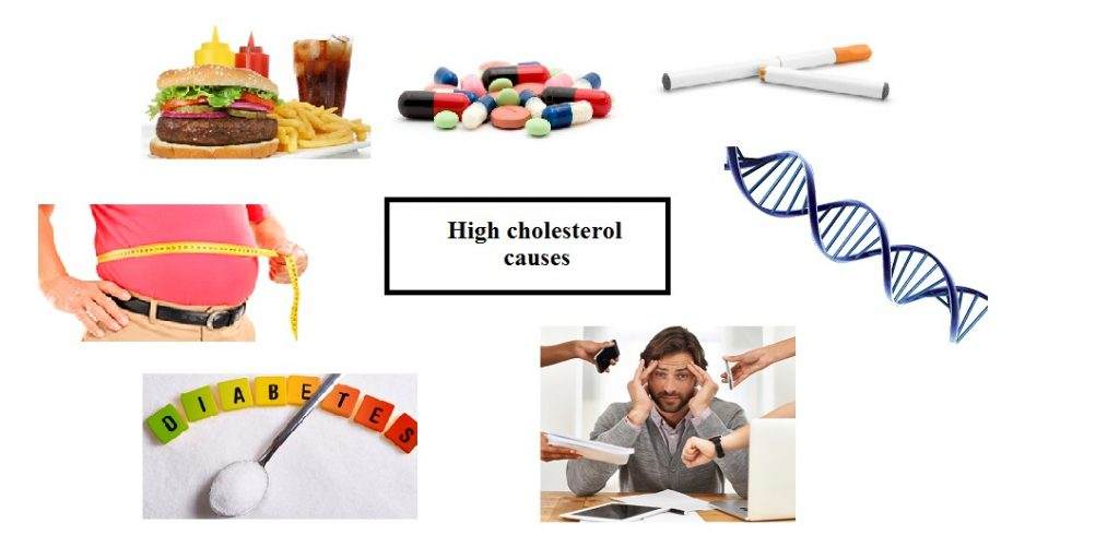 What increases cholesterol levels in the blood?