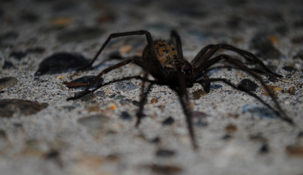 Arachnophobia (fear of spiders): specific type of phobia