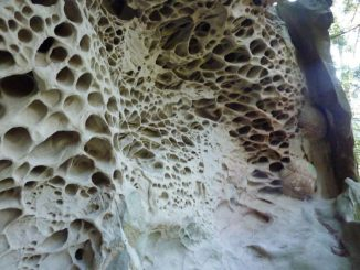 What is Trypophobia? And Is It Real?
