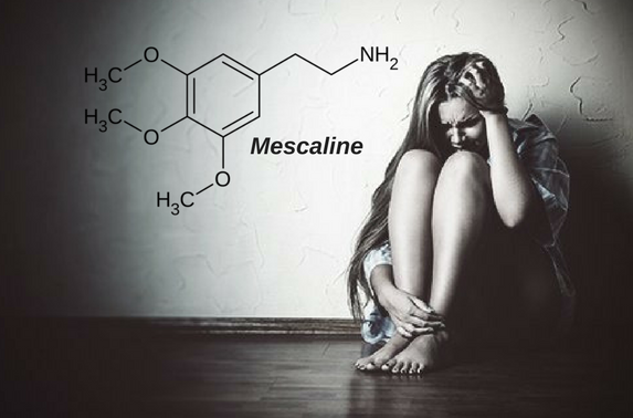 Mescaline and PEYOTE: Uses, Side Effects, Interactions and Warnings