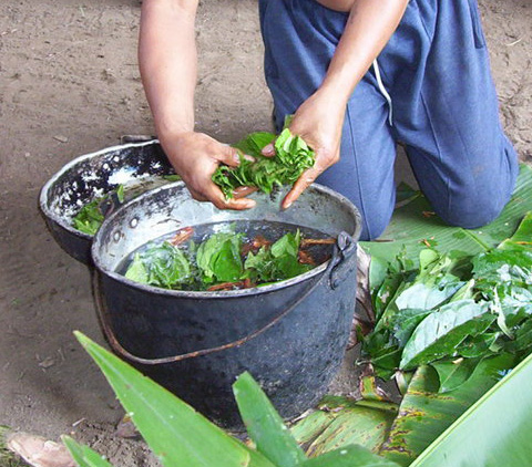 What is the ayahuasca?