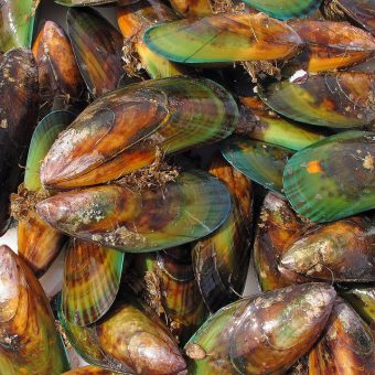 Is green lipped mussel safe?