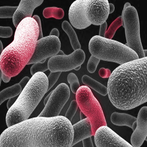 What infections does cefuroxime treat?